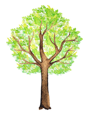 Green tree in summer isolated on white background. Watercolor hand painted illustration