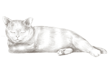 Grey cat lies and slumbers isolated on white background. Lead pencil graphic hand drawn illustration