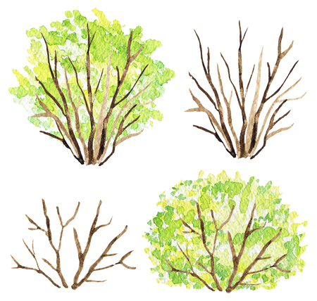 Set of bushes with and without green foliage isolated on white background. Watercolor hand painted illustration