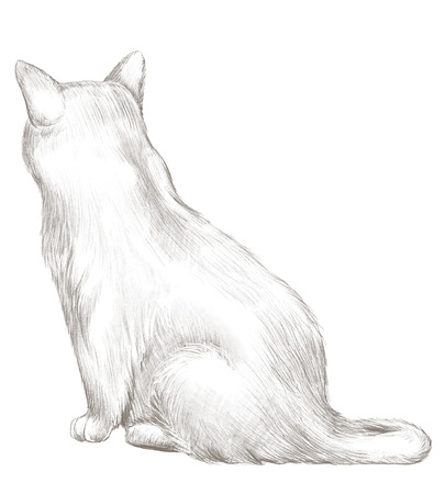 Grey cat sits back and observes isolated on white background. Lead pencil graphic hand drawn illustration