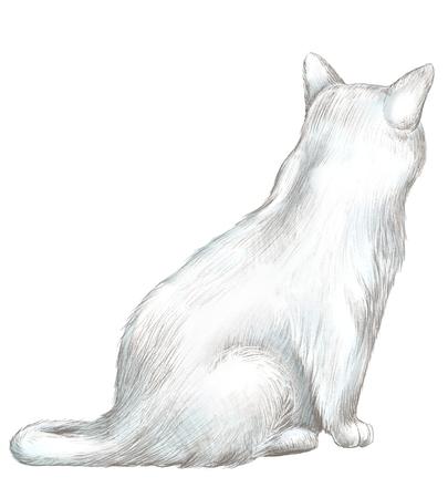 White cat sits back and observes isolated on white background. Lead pencil graphic hand drawn illustration