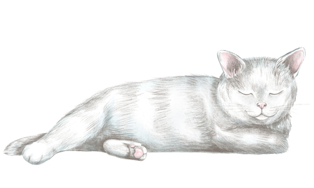 White cat lies and slumbers isolated on white background. Lead pencil graphic hand drawn illustration