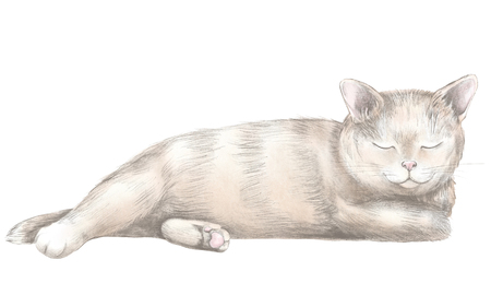 Brown cat lies and slumbers isolated on white background. Watercolor and lead pencil graphic hand drawn illustration