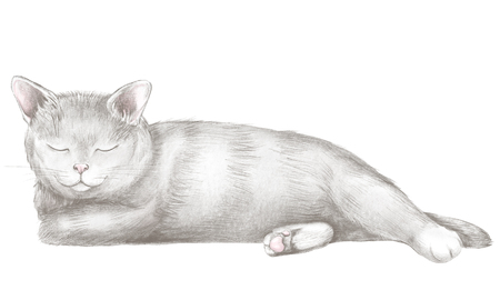 Black cat lies and slumbers isolated on white background. Lead pencil graphic hand drawn illustration