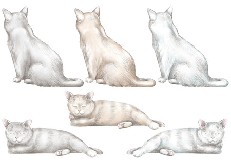 Set of six cats in two poses of different colors isolated on white background. Watercolor and lead pencil graphic hand drawn illustration
