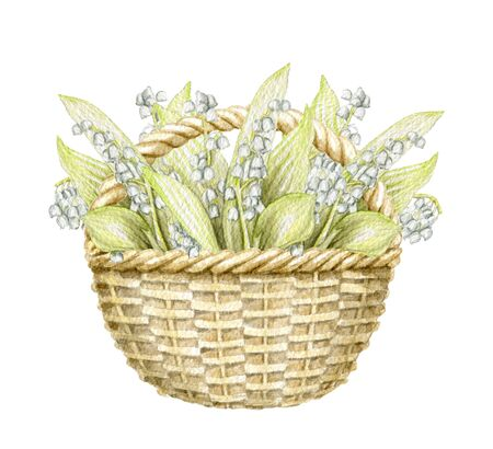 Vintage wicker basket with bouquet with lilies of the valley isolated on white background. Watercolor hand drawn illustration