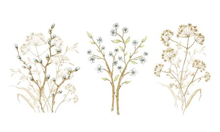 Set with bouquet dry herbs, willow branches and twigs with flowers isolated on white background. Watercolor hand drawn illustration