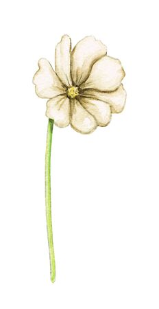 One green twig with yellow flowers isolated on white background. Watercolor hand drawn illustration Stockfoto