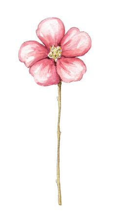 One vintage red flower isolated on white background. Watercolor hand drawn illustration