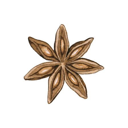 One brown star clove cinnamon isolated on white background. Watercolor hand drawn illustration
