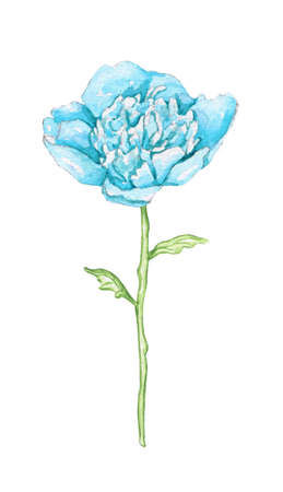 One blue peony flower isolated on white background. Watercolor hand drawn illustration 版權商用圖片