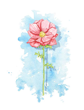 One vintage red flower on blue stain background. Watercolor hand drawn illustration 版權商用圖片