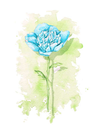 One vintage blue peony flower on green stain background. Watercolor hand drawn illustration 版權商用圖片