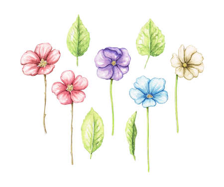 Set with variety of colorful flowers and leaves isolated on white background. Watercolor hand drawn illustration 版權商用圖片 - 154878291