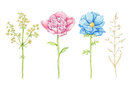 Set with blue and pink flowers and vegetations isolated on white background. Watercolor hand drawn illustration 版權商用圖片