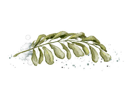 Autumn vintage plant palm branch with green leaves and splashes isolated on white background. Watercolor hand drawn illustration Imagens
