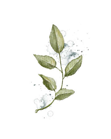 Autumn vintage plant branch with green leaves and splashes isolated on white background. Watercolor hand drawn illustration Imagens