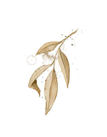 Autumn vintage plant branch with yellow leaves and splashes isolated on white background. Watercolor hand drawn illustration