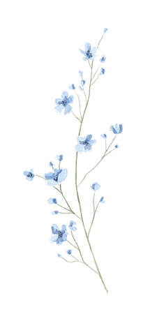 Floral vintage twig with meadow dried blue flowers isolated on white background. Watercolor hand drawn illustration sketch