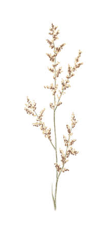 Floral vintage meadow dried retro brown twig isolated on white background. Watercolor hand drawn illustration sketch