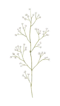 Floral vintage meadow dried retro green twig isolated on white background. Watercolor hand drawn illustration sketch 版權商用圖片