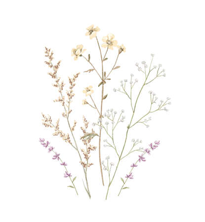 Vintage floral composition bouquet with meadow dried flowers isolated on white background. Watercolor hand drawn illustration sketch Archivio Fotografico