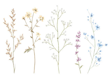 Watercolor set with meadow dried flowers isolated on white background. Watercolor hand drawn illustration sketch