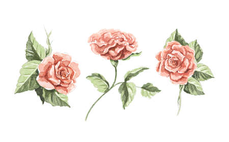 Watercolor set with three vintage red flowers roses and leaves isolated on white background. Watercolor hand drawn illustration sketch
