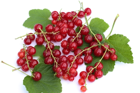 ribes: Red currant fruits isolated on a white background. Stock Photo