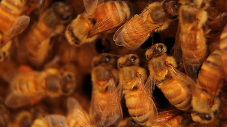 a lots of bees Stock Photo