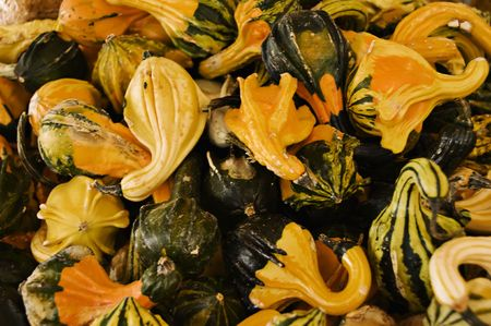 Lots of gourds for a fall background