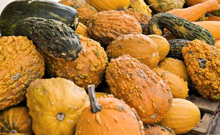 Background of bumpy fall gourds for decoration. Stock Photo - 3710983