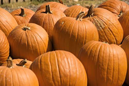 A display of big, bright, orange pumpkins for fall.