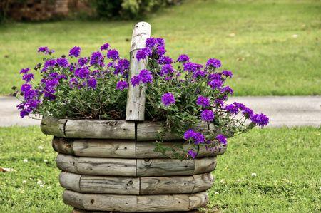 紫色の開花バーベナの木製のバスケット 写真素材