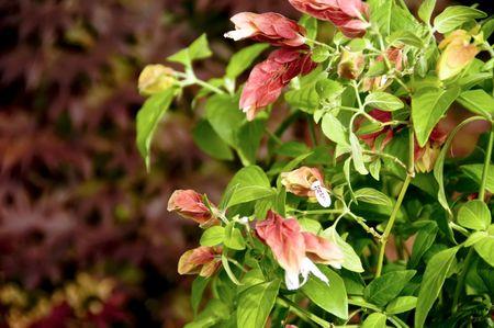 えびのような鉢植えの植物。