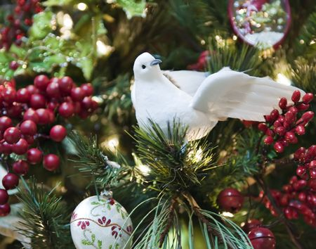 A white dove surrounded with red berries Stock Photo