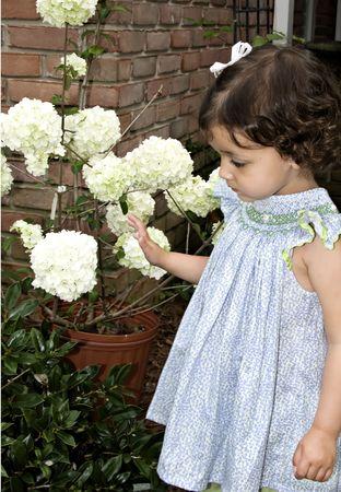 admiring: Little girl admiring a snowball plant outdoors.