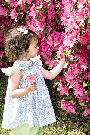 azaleas: Little girl picking and admiring azaleas in spring.