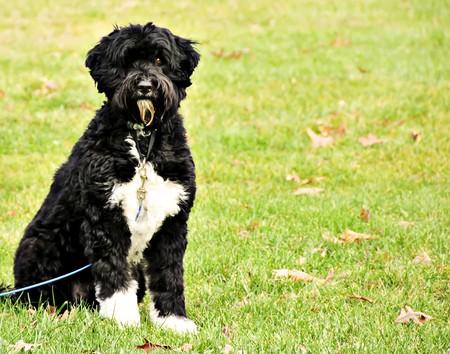 A black dog posing sitting in green grass.