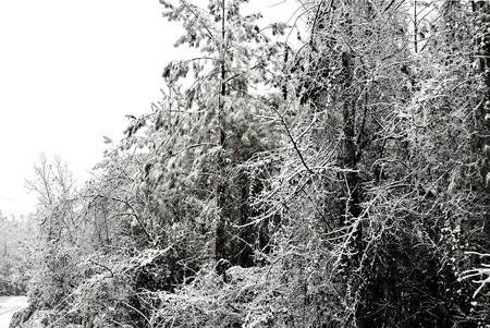 A snowey winter scene of snow covered trees. Stock Photo