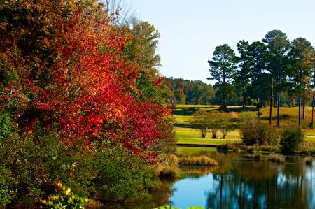 青い水の中の秋の葉ものがたり