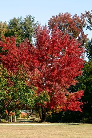 青い空と最高の秋の色を記述するこの秋の風景