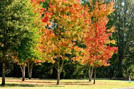 オレンジ、黄色、赤および金はこの秋の風景をについて説明します。