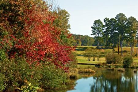 青い水の秋の葉の反射