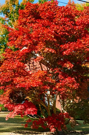 A beautiful vibrant fall and autumn landscape.