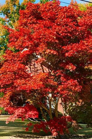Een prachtige levendige vallen en de herfst landschap.