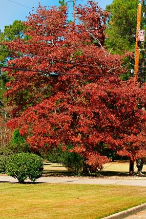 栄光と活気に満ちた秋色シンとツリー。 写真素材