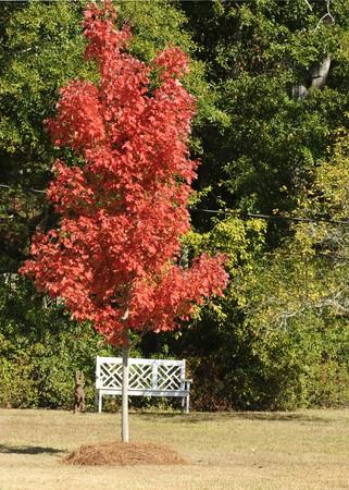 白い庭のベンチとウサギ、秋のツリー