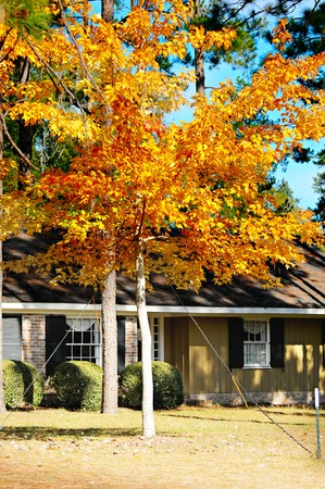 A tree with yellow leaves showing off beautiful fall color Stock Photo