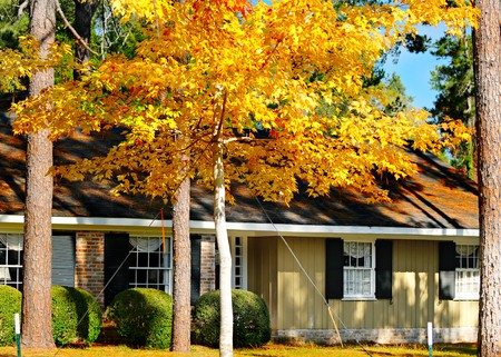 A traditional home graced with bright yellow fall leaves.